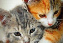 Süße Hauskatzen 220x150 - Süße Hauskatzen