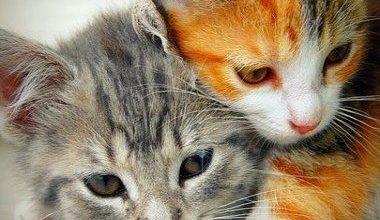 Süße Hauskatzen 380x220 - Süße Hauskatzen