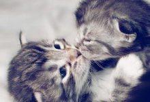 Süße Katzen Bilder Kostenlos 220x150 - Süße Katzen Bilder Kostenlos
