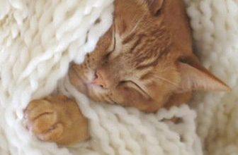 Süße Katzen Bilder Zum Ausdrucken 336x220 - Süße Katzen Bilder Zum Ausdrucken