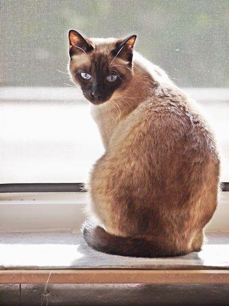 Süße Katzen Bilder Zum Ausmalen Bilder Und Sprüche Für Whatsapp