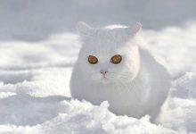 Süße Katzen Fotos Bilder Kostenlos 220x150 - Süße Katzen Fotos Bilder Kostenlos