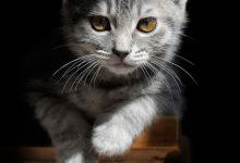 Süße Katzen Sprüche 220x150 - Süße Katzen Sprüche