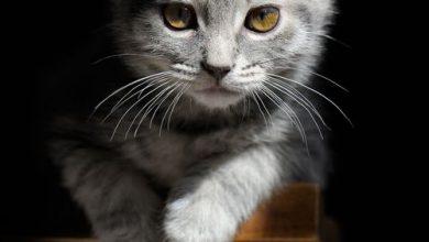 Süße Katzen Sprüche 390x220 - Süße Katzen Sprüche