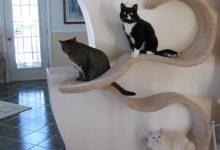 Süße Katzen Und Hunde 220x150 - Süße Katzen Und Hunde
