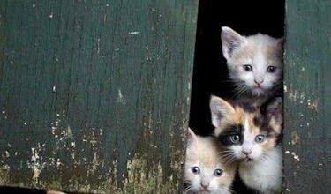 Süße Katzen Videos 375x220 - Süße Katzen Videos