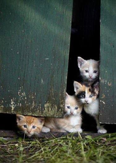 Süße Katzen Videos - Süße Katzen Videos