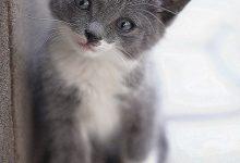 Süße Katzenbabys Bilder 220x150 - Süße Katzenbabys Bilder