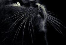 Süße Katzenbilder 220x150 - Süße Katzenbilder