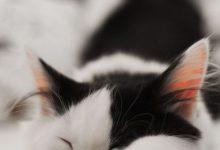 Süße Katzenbilder Kostenlos Downloaden 220x150 - Süße Katzenbilder Kostenlos Downloaden
