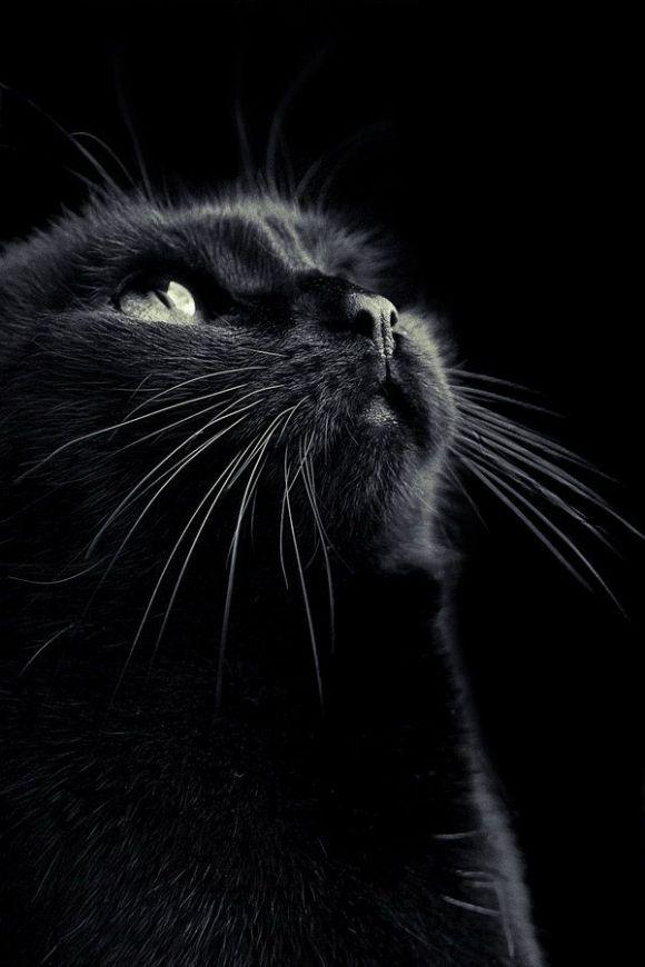 Süße Katzenbilder - Süße Katzenbilder