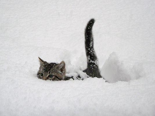 Süße Katzenfotos - Süße Katzenfotos