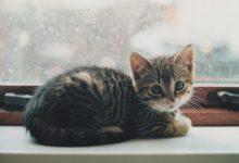 Süße Katzennamen 220x150 - Süße Katzennamen