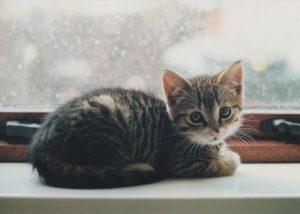 Süße Katzennamen 300x214 - Süße Katzennamen