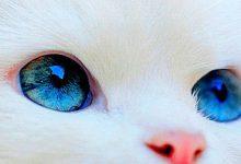 Süße Kleine Katzen 220x150 - Süße Kleine Katzen