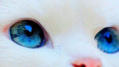 Süße Kleine Katzen 390x220 - Süße Kleine Katzen