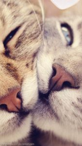 Süße Tier Bilder 169x300 - Süße Tier Bilder