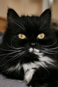 Savannah Katze 200x300 - Savannah Katze