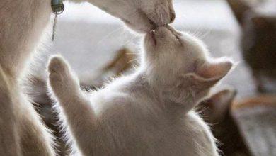 Schöne Baby Katzen 390x220 - Schöne Baby Katzen
