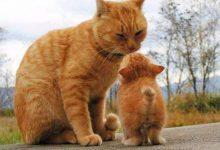 Schöne Bilder Katzen 220x150 - Schöne Bilder Katzen
