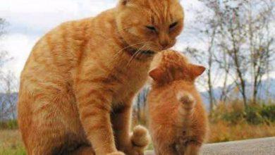 Schöne Bilder Katzen 390x220 - Schöne Bilder Katzen