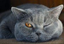 Schöne Bilder Katzen Bilder Kostenlos 220x150 - Schöne Bilder Katzen Bilder Kostenlos
