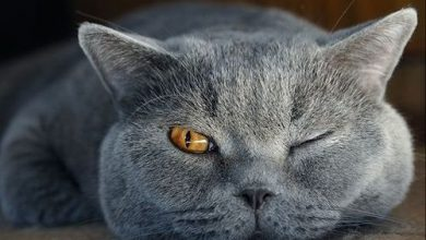 Schöne Bilder Katzen Bilder Kostenlos 390x220 - Schöne Bilder Katzen Bilder Kostenlos