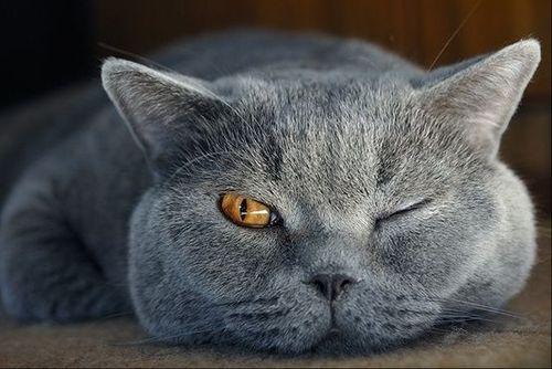 Schöne Bilder Katzen Bilder Kostenlos Bilder Und Sprüche Für