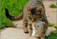 Schöne Bilder Von Katzen 220x150 - Schöne Bilder Von Katzen