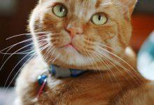 Schöne Katzen Kaufen 220x150 - Schöne Katzen Kaufen
