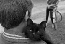 Schöne Katzenbilder 220x150 - Schöne Katzenbilder