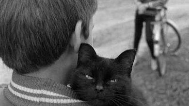 Schöne Katzenbilder 390x220 - Schöne Katzenbilder