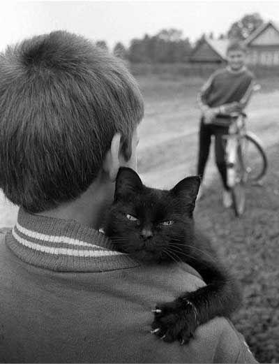 Schöne Katzenbilder - Schöne Katzenbilder