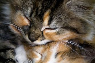 Schöne Katzenfotos 333x220 - Schöne Katzenfotos
