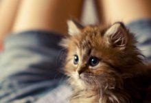Schöne Sprüche Katzen 220x150 - Schöne Sprüche Katzen