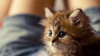 Schöne Sprüche Katzen 390x220 - Schöne Sprüche Katzen