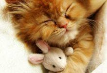 Schlafende Katzen Bilder Bilder Kostenlos 220x150 - Schlafende Katzen Bilder Bilder Kostenlos