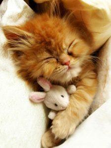Schlafende Katzen Bilder Bilder Kostenlos 225x300 - Schlafende Katzen Bilder Bilder Kostenlos