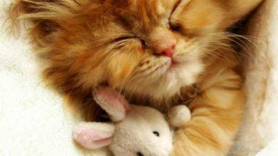 Schlafende Katzen Bilder Bilder Kostenlos 390x220 - Schlafende Katzen Bilder Bilder Kostenlos