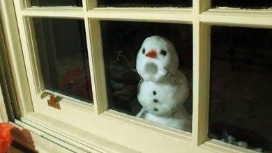 Schneehasen Bilder Zum Ausdrucken 390x220 - Schneehasen Bilder Zum Ausdrucken