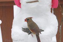 Schneemann Zeichnung 220x150 - Schneemann Zeichnung