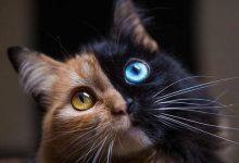 Schrödingers Katze 220x150 - Schrödingers Katze