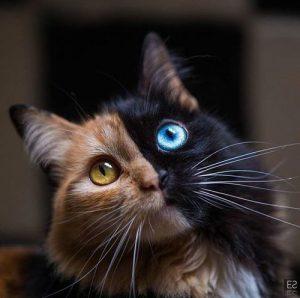 Schrödingers Katze 300x298 - Schrödingers Katze