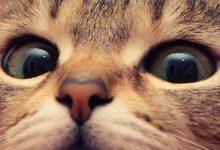 Schwarze Katzen Bilder Bilder Kostenlos 220x150 - Schwarze Katzen Bilder Bilder Kostenlos
