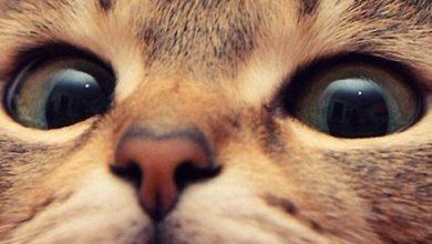 Schwarze Katzen Bilder Bilder Kostenlos 390x220 - Schwarze Katzen Bilder Bilder Kostenlos