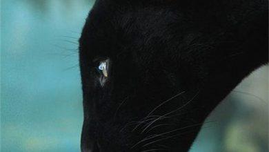 Schwarze Katzen Kaufen 390x220 - Schwarze Katzen Kaufen