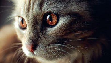 Search Cat Pictures Bilder 390x220 - Search Cat Pictures Bilder