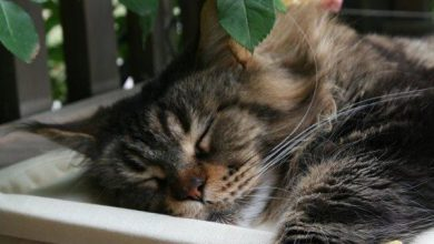 Search For Pictures Of Cats Bilder 390x220 - Search For Pictures Of Cats Bilder