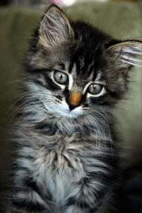 Show Me A Picture Of A Baby Cat Bilder 201x300 - Show Me A Picture Of A Baby Cat Bilder