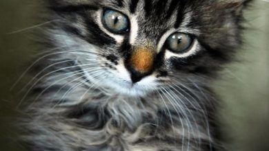 Show Me A Picture Of A Baby Cat Bilder 390x220 - Show Me A Picture Of A Baby Cat Bilder
